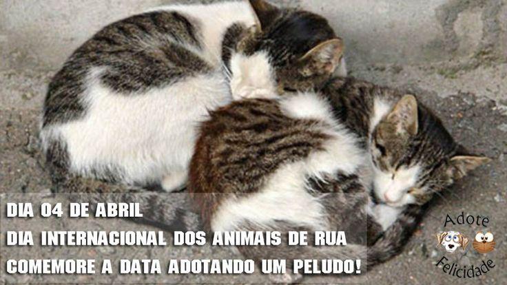 Hoje, 4 de abril é comemorado o Dia Mundial dos Animais de Rua. No dia 4 de outubro se comemora o dia de São Francisco de Assis, o santo protetor dos animais. São Francisco de Assis viveu na Itália…