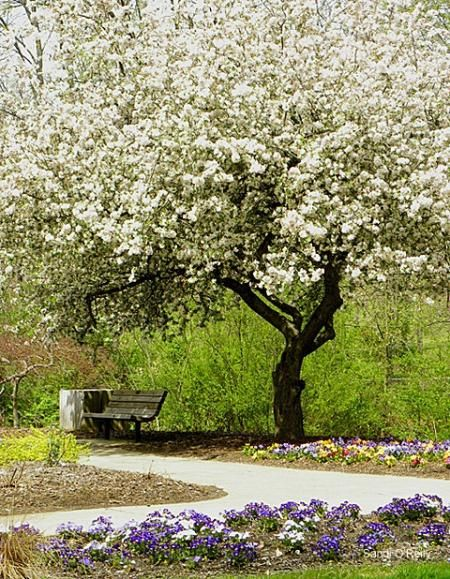 Greensboro Arboretum, Greensboro, North Carolina...this is a special place for me