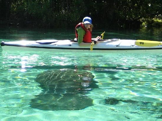 Crystal River Manatee Tours Best Western
