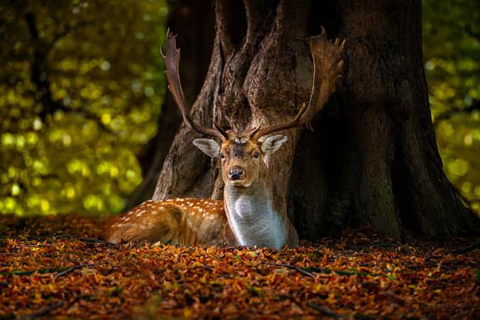 Hues Of Autumn by Andy  Wellings