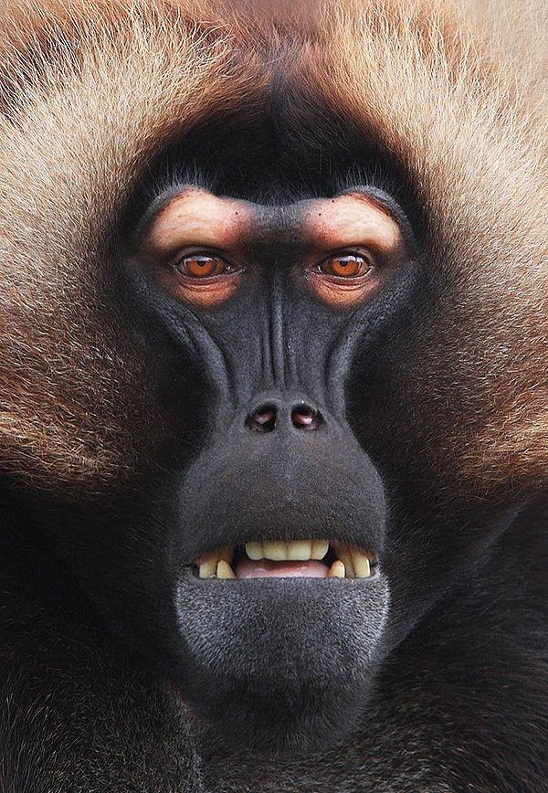 Baboon mask by Steve McCay