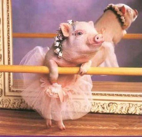 the pig wants to dance balet