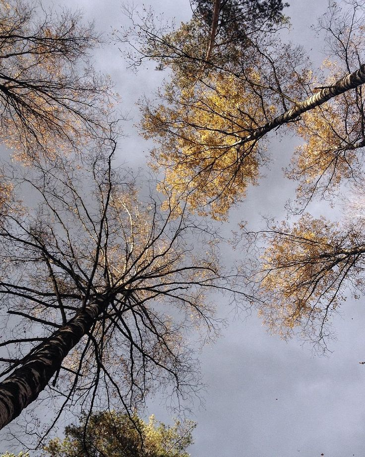 """~ Autumn ~ """"So dull and dark are the November days. The lazy mist high up the evening curled ~ John Clare, November"""