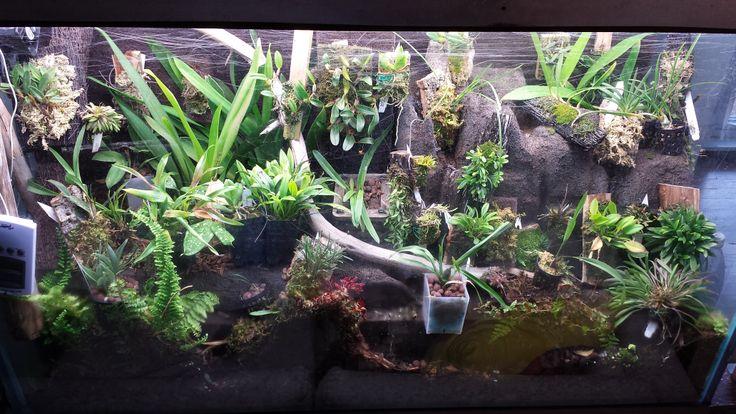 12 4 2013 completed orchidarium with 29 genera of orchids - Begonia argentata ...