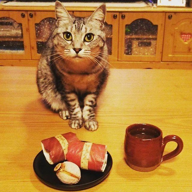 #柿の美きんとん♡  #干し柿 の中に#栗きんとん が 包まれてて上品な味わい♡笑  これ#大好き♡  #中津川 #川上屋 #和菓子  #猫 #ねこ #愛猫 #サバトラ #ニャンコ #にゃんこ #ねこ部 #lovecat #catlove #catstagram #kitty #whitecat #kawaii #ねこすたぐらむ #にゃんすたぐらむ #猫ばか #元野良猫 #溺愛 #猫中心 #猫好き #みんねこ