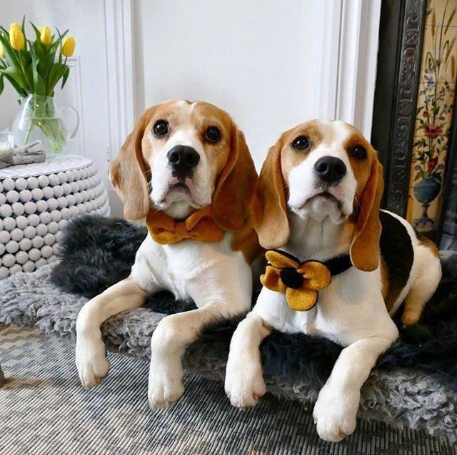 The Happy Beagle Puppy And Kids Beagleslover Beaglemom