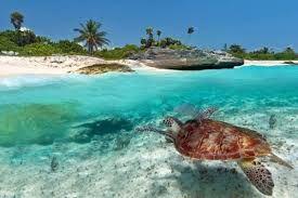 Акции по 🇹🇿 о.Занзибар 🇹🇿 Hideaway of nungwi 5 ⭐️ На крыльях АК Fly Dubai 🇦🇪 Все бронировки с вылетами 3.11; 5.11; 9.11 ‼️️  🌴 Занзибар из Херсона/Одессы! ✈️ Вылет 13.11 на 10 ночей! Coral Reef Resort 3* Pwani Mchangani BB от 926/955 $ ½ DBL Paradise Beach Bungalows 3* Nungwi BB от 976/1025 $ ½ DBL Tanzanite Beach Resort 3* Nungwi BB 1003/1035 $ ½ DBL Palumbo Reef Beach Resort 3* Uroa BB от 1066/1106 $ ½ DBL Samaki Lodge 4* Uroa BB от 1200/1207 $ ½ DBL Sunset Kendwa 3*…
