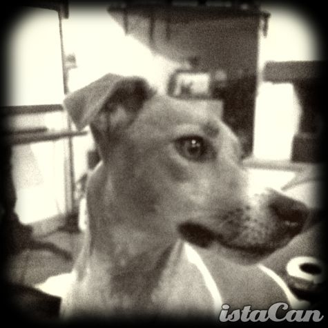 Dog B/W