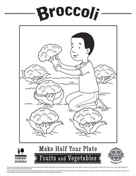 Free Printable Broccoli Childrens Coloring Sheet In Spanish Food Hero
