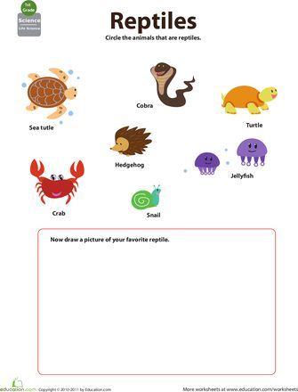 1000+ images about Worksheets on Pinterest | Thanksgiving, Science ...
