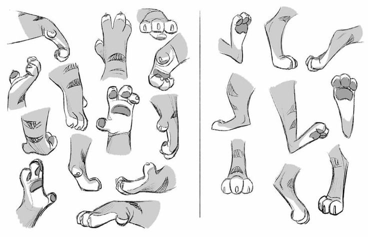 Zootopia Tiger Hands and Feet #reference #model #sheet #hand #foot #Disney