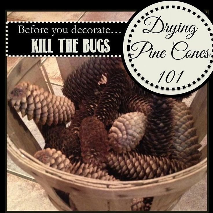 How to Clean and Dry Pine Cones for Decorating http://www.hometalk.com/2467477/how-to-clean-and-dry-pine-cones-for-decorating?se=fol&tk=35rj7f