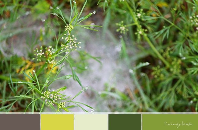 spider web in the grass, vibrant green colour palette - livingcloth.com