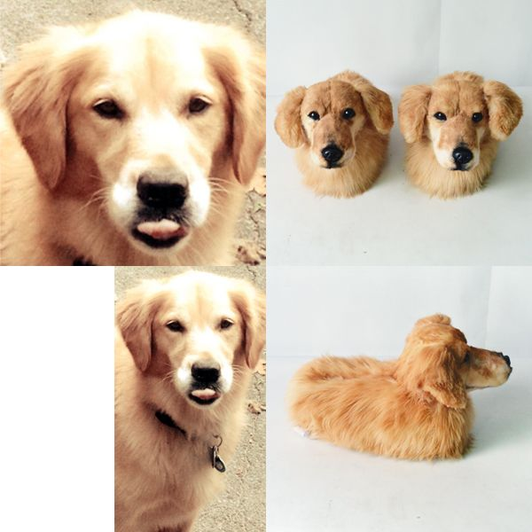 Lailah And Her Slippers 3 3 Your Pet Pets Golden Retriever