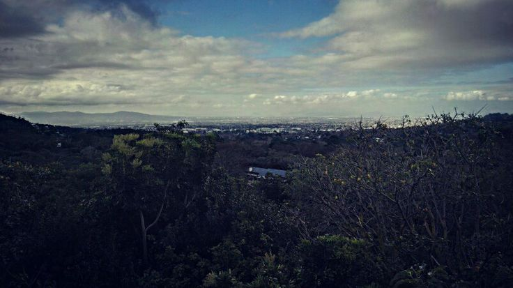Beautiful View On The Boomslang At Kirstenbosch Botanical Gardens In Cape Town.