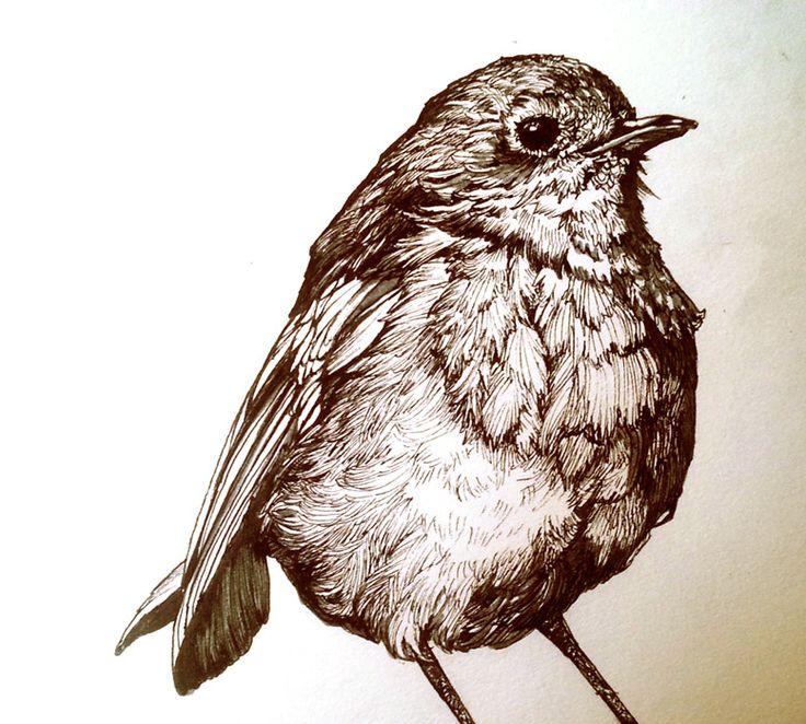 Robin Bird Drawing Illustration