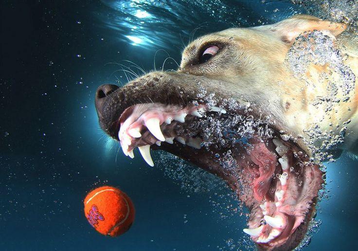 Удивительные подводные собаки (22 фото) » MEGABITOV.NET