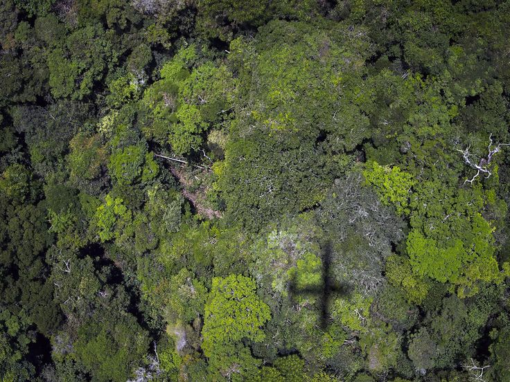 The Amazon rainforest is losing its ability to absorb carbon dioxide in the atmosphere as trees are dying, which could have negative implication on climate change across the globe.