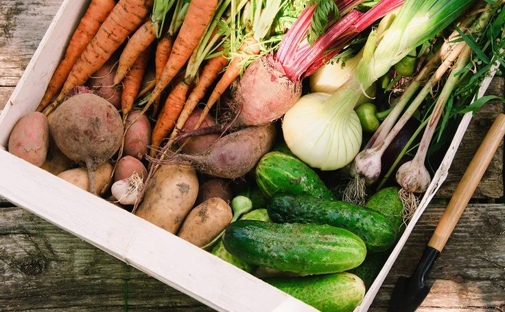 Dear Modern Farmer: I've been growing fruits and veggies for my family, but would like to start selling farm shares through a CSA. How do I get started?