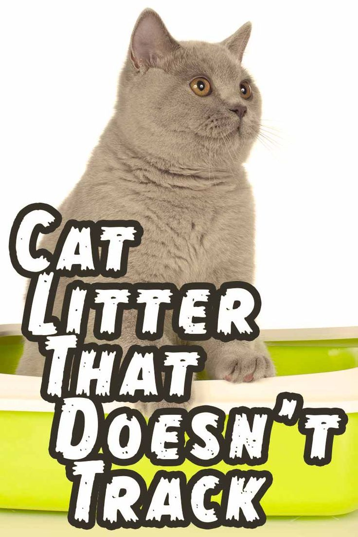 Cat Litter That Doesn't Track The Best Products and