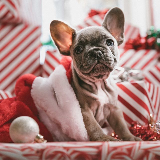 Dream Christmas Morning Situation Right There Happy Holidays Everybody Eat Drink And Be Merry Just Remembe Holiday Dog Toys Dog Holiday Dog Christmas Gifts