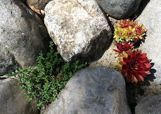 ...en hverdagsblogg...: Plantene i steinbedet