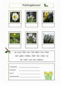 Arbeitsblätter, Gratisdownload für Grundschule und Sekundarstufe 1 - Lernbiene Verlag