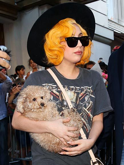 Lady Gaga and poodle...the Poodle Peace Parade wouldn't be complete without them.
