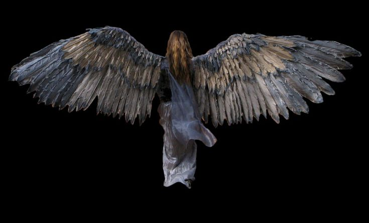 Image wings.com