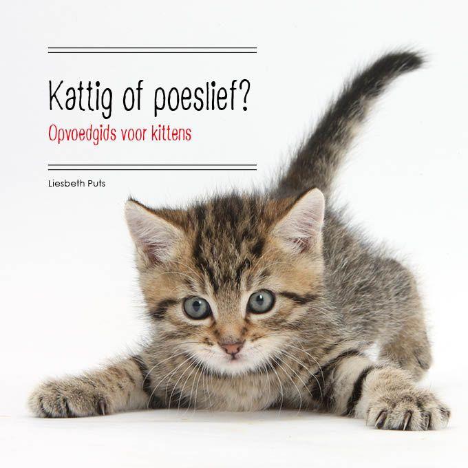 Mijn boek is verschenen! Alles over de aanschaf en het opvoeden van een kitten:  Het kiezen van een kitten * Een kitten zindelijk maken * Het voorkomen van angst en stress * Het afleren van ongewenst gedrag * Gezondheid * Je kitten en je andere katten * en nog veel meer.