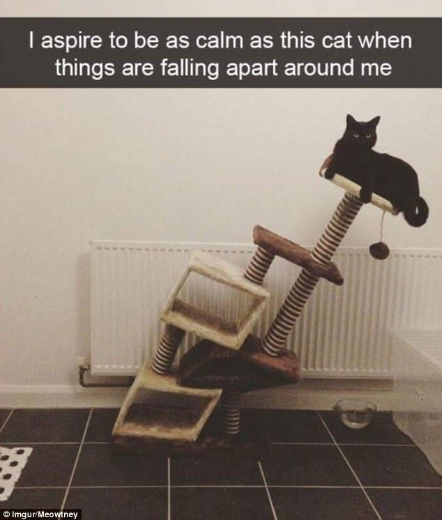 23 Hilarious Snapchats Capturing Cats During Precious Moments