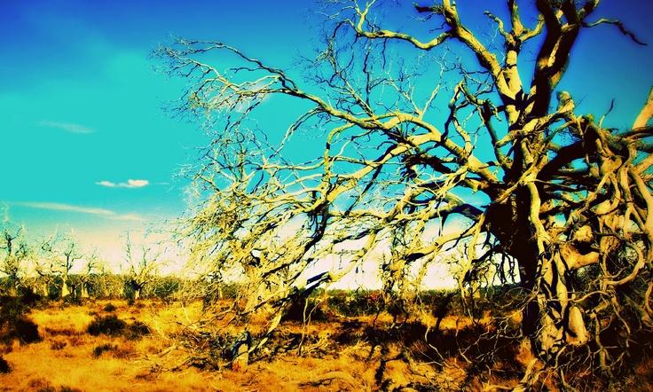 My favorite dead tree's.