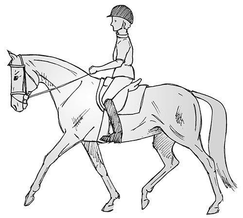 Die Sache mit der Senkrechten: Kaum ein Thema wird so diskutiert wie die Halseinstellung von Dressurpferden. Training vor, an oder hinter der Senkrechten?