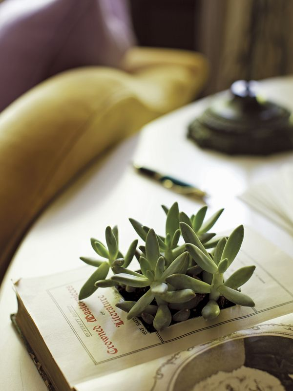 How to Decorate Your First Apartment- book planter idea