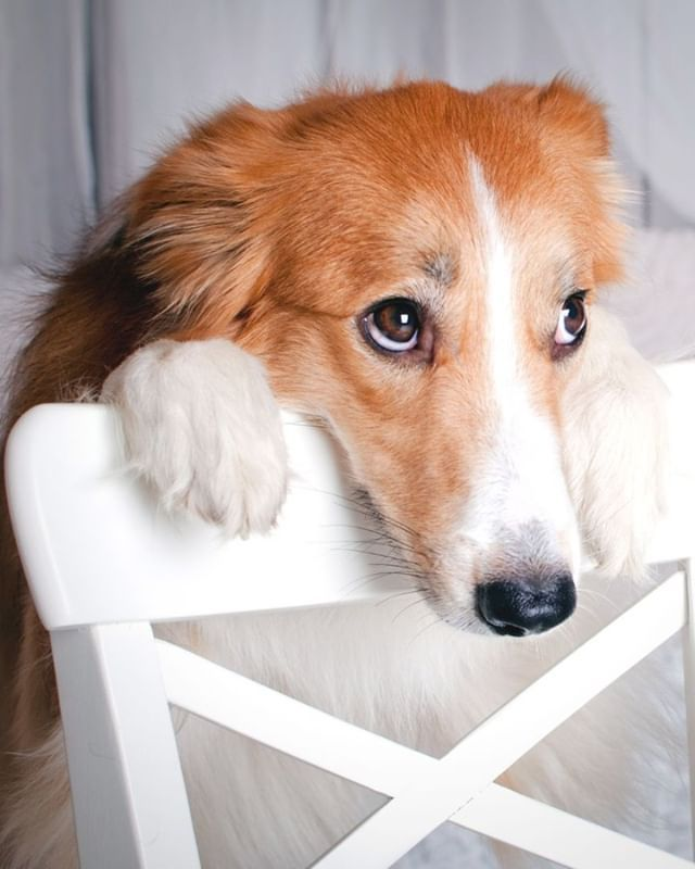 While You Consider Your Dog A Part Of Your Family And A Best Friend An Insurer Considers Dogs A Risk Having A Dog Your Dog Homeowners Insurance Coverage Dogs