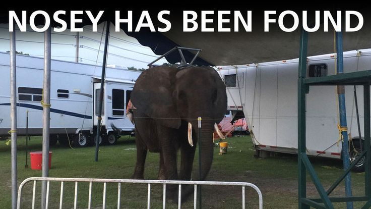 Petition update · Nosey Performing with Golden Ring Circus: help us track her! · Change.org / https://www.change.org/p/usda-and-congress-please-help-to-rescue-an-abused-elephant-named-nosey/u/20423288?utm_medium=email&utm_source=79920&utm_campaign=petition_update&sfmc_tk=6UMe2p74Jcd3Hy7z0QizDL65smqSqPvLIZJ7b4UQ8Xg06bJKdh5QgpvlDlwRuc1d