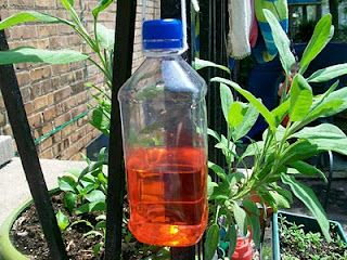 Butterfly nectar  Finally, mix up some butterfly nectar (1/4 cup sugar, 1 cup water, 3-4 drops of red food coloring) and pour it into your bottle. Tie on some string and hang your feeder outside near some flowering plants!