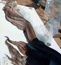 Real Life Mermaid Found On The Beaches Of Hawaii And Egypt. Or Is It?