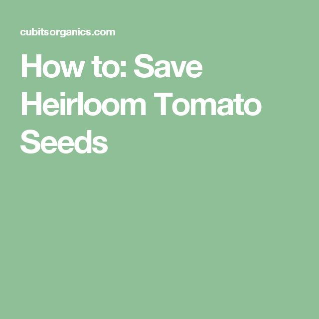 How to: Save Heirloom Tomato Seeds