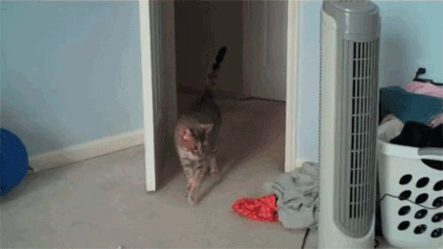 Curiosity might not actually kill the cat, but it will certainly get him into mischief -- or at least spook him a little.