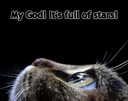 """cat photo - quote from """"2010"""" sequel to 2001: A Space Odyssey"""