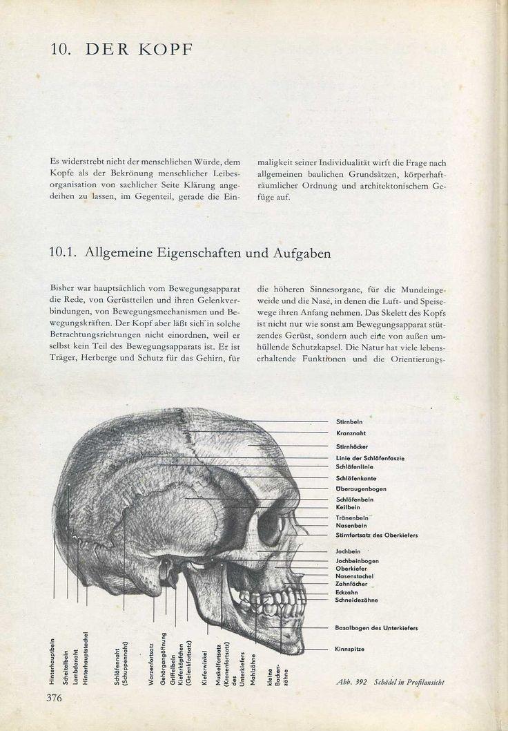 Ungewöhnlich Frage Der Anatomie Fotos - Menschliche Anatomie Bilder ...