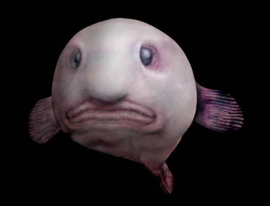 "This is a ""Blobfish"" - I wonder how long it took them to come up with that name?"
