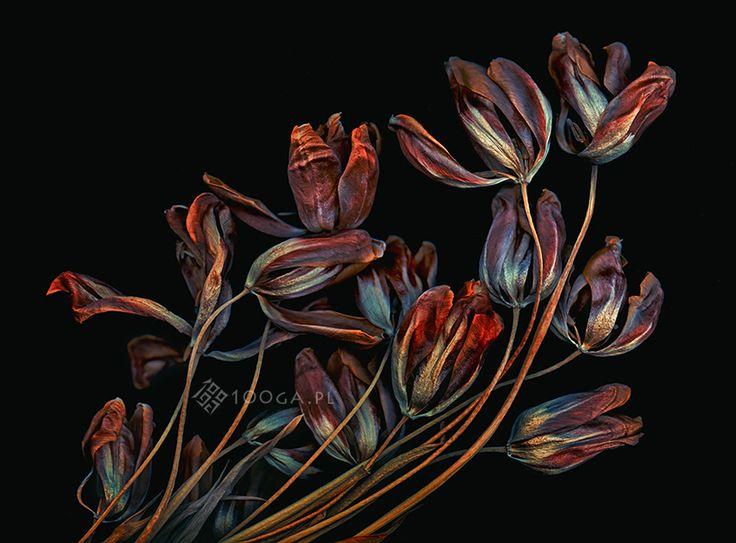 Plenty of Plants - Joanna Stoga fotograf