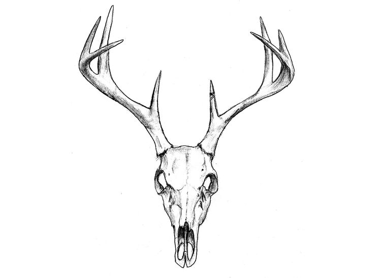 deer skull coloring pages - photo#26
