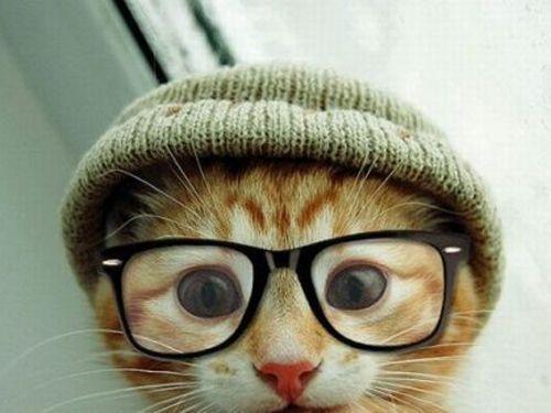 lol..awe,, so cute.Geek, Hipster Cat, Kitty Cat, Glasses, Hipster Kitty, Cute Cat, Kittens, Hipstercat, Animal