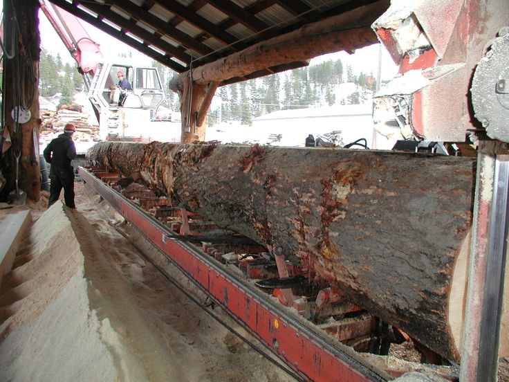 Cutting large tree into large timbers for beams