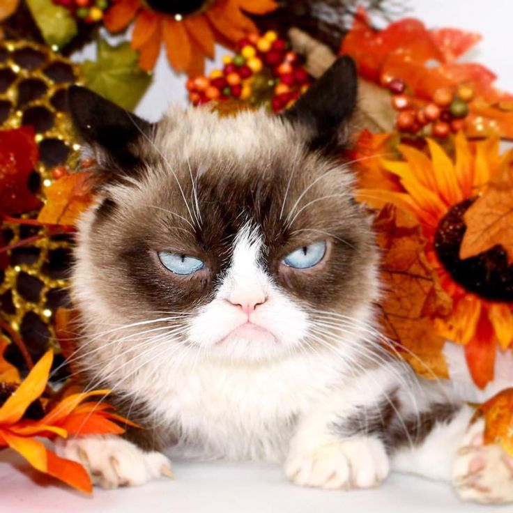 I Am Excited Grumpy Cat