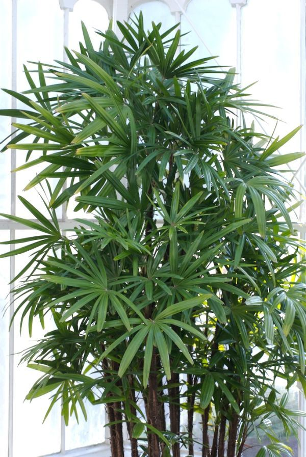 12 Air-Purifying Houseplants To Decorate Your Home With