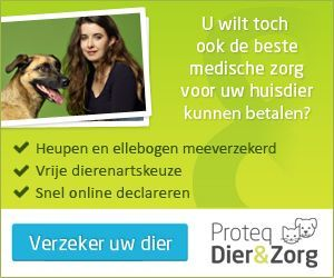Honden; over verzorging, aandoeningen, eerste hulp, medische zorg en preventie van ziekten. Instructievideo's voor lastige klusjes bij de hond.